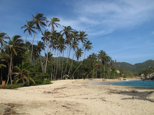 Palm trees by the beach in Tayrona National Park, Taganga, Santa Marta, Colombia