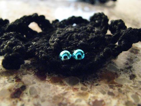 blue eyed spider