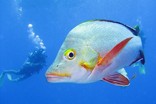 Роњење међу рибама (аутор SF Brit)