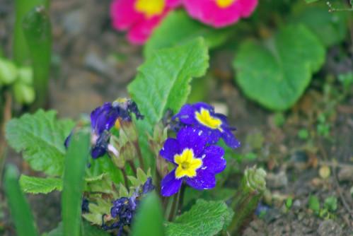 blue flowers, istanbul, pentax k10d