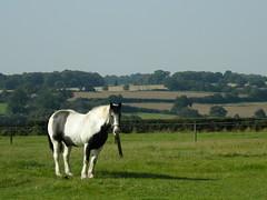 Horse in Hertfordshire