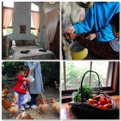 Farm Stay Activities