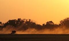 Wheat Harvest 9886