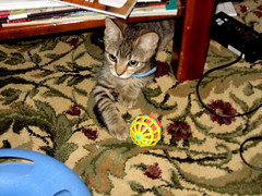 Calvin playing with ball