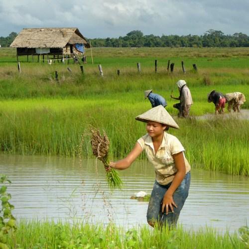ทางรอดสังคมไทย กับปัญหาเกษตรกรไทยวันนี้