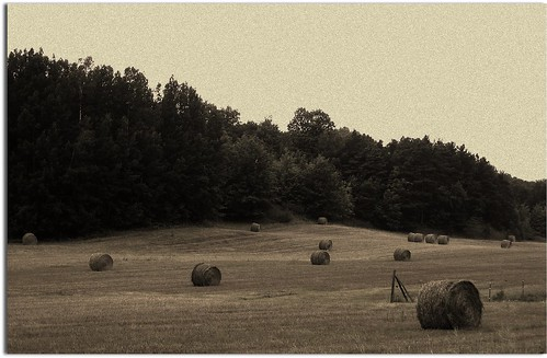 Baled hay (South French Rd) by John Levanen