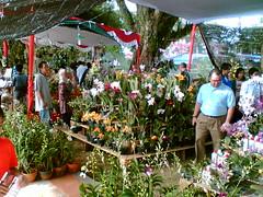 Festival Anggrek Palembang