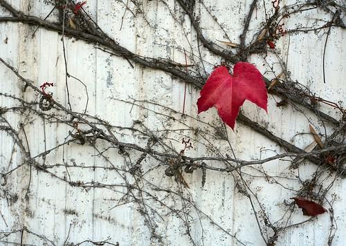 Fall Wall 0212