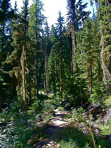 Trail 404 to Blossom Lake
