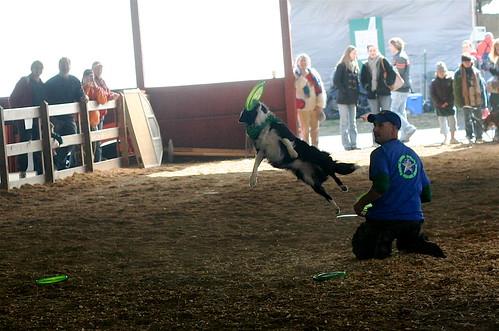 I love the sheep dog contests!