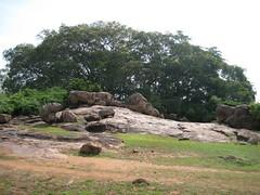 Banyan tree of the Kanni Koil 1