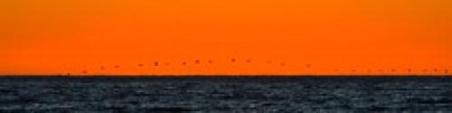 Birds in a flock fly in silhouette on Morro St...
