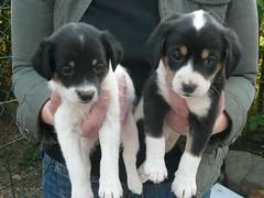 2 cuccioli