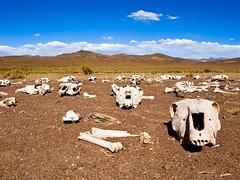 2002 gab es in der Gegend eine aussergewöhnliche Kältewelle. Nicht nur Tiere sind gestorben...