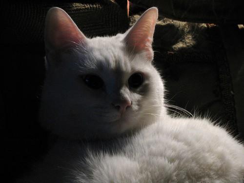 Bedtime Cat
