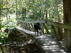 Tinker Cliffs - Jimmie on Bridge