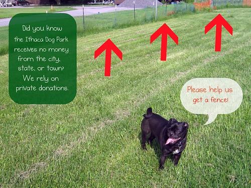 Walter: Ithaca Dog Park
