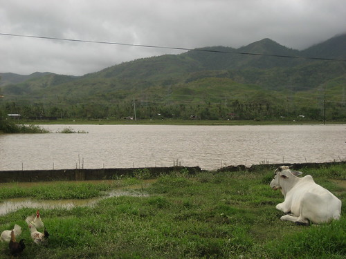 This is not a lake--it the flooded rice fields beside my grandparents' house.