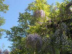 Bear Creek Park May 24 2008 036