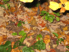 How many toads can you see?