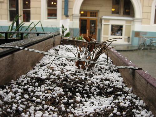 spring snow.