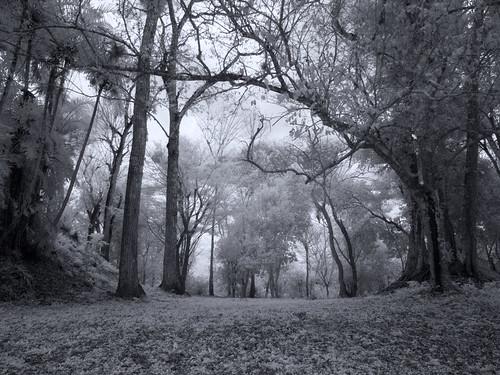 Forest at Uaxactun Maya Ruins