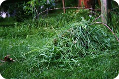 Neighbors\' Grass Clippings