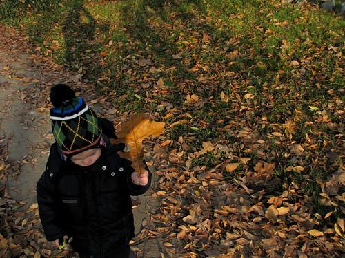 autumn surrenders