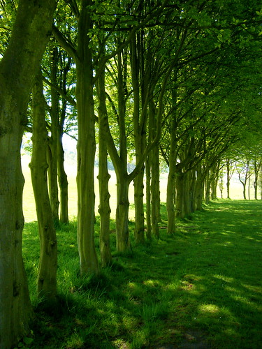 Tree-Lined
