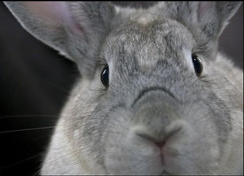 Originally uploaded by RabbitMatch.org