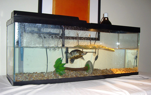 basking turtle setup