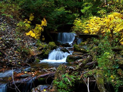 Spring Creek Autumn