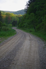A Back Road in Allegany State Park