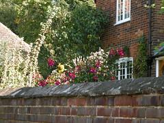 Garden behind a wall