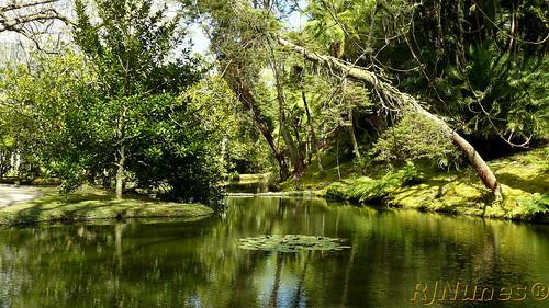 Landscape-S.Miguel-Apr2008.c1-p1000437