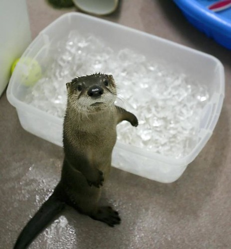 otterwithice