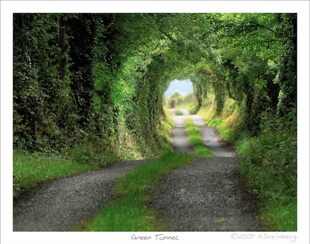 Green Tunnel or 'The Road to Hobbiton'
