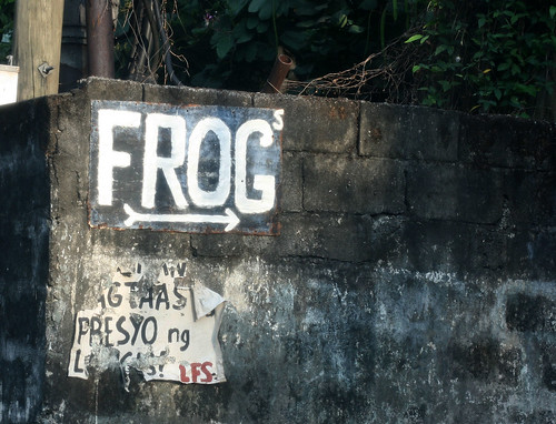 frogs for sale