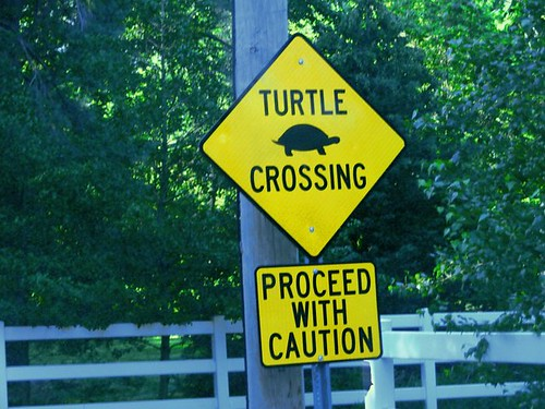 TURTLE CROSSING v.2