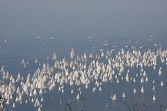 Barcolana 2008
