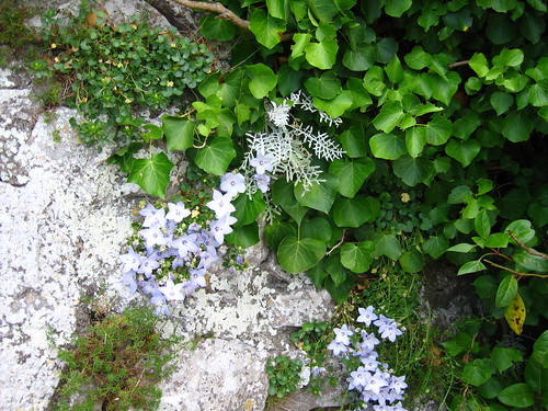 Flowers from Crag