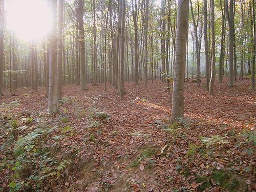 Filtri d'autunno