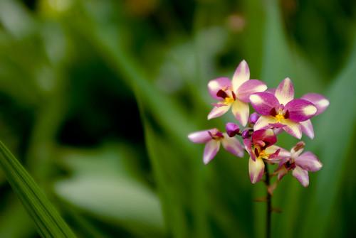 Orchids at Hortpark