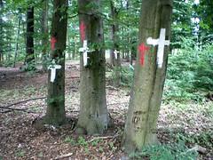 Waldbesetzung Kelsterbach Juni 2008 (02)