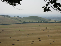 Fields in late summer, Pittstone Hill