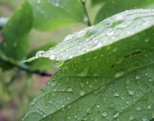 rain n leaves nice