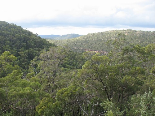 Ku-ring-gai national park