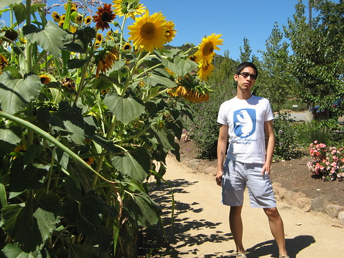 LS & Sunflowers in Sonoma