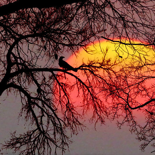 The bird and the sun by *L*u*z*a* return to nature