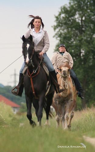 Kamelreiten in Oberösterreich
